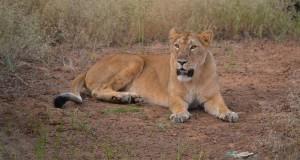 Wildlife Sanctuary Gujarat