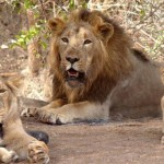 GIR NATIONAL PARK AND SANCTUARY