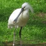 Wildlife in Tamil Nadu