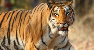WILDLIFE OF THE INDIAN SUBCONTINENT