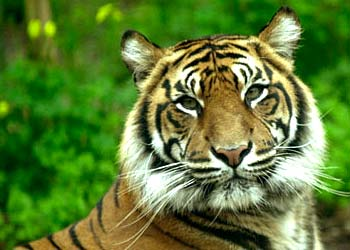 wildlife protection in india India's wildlife protection act, 1972- an overview posted on october 10, 2017 april 24, 2018 by saurab soon after the stockholm convention on environment, the indian government responded positively by passing an act for the protection of india's wildlife (both terrestrial and aquatic) and their habitats.
