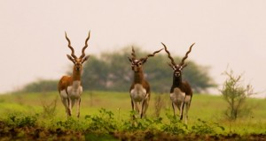 National Parks in Andhra Pradesh