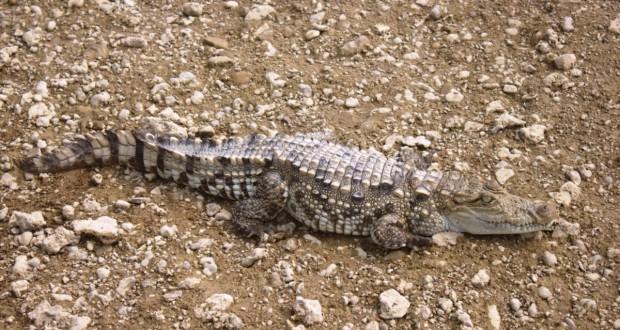 Wildlife in Uttar Pradesh
