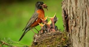 Wildlife in Mizoram