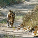 Rajasthan in Wildlife
