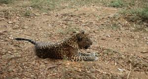National Park in Maharashtra