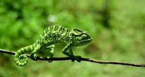 Wildlife Tours in Kerala
