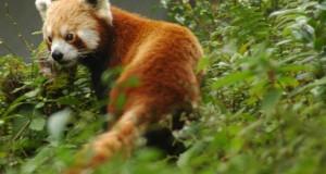 Wildlife Tour in Manipur